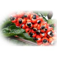 Quality Guarana Extract for sale