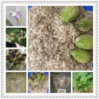 Quality Kiri seeds with phyto certificate for sale