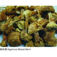 Buy cheap Agaricus Blazei Murr from wholesalers