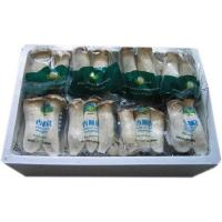 Quality Fresh Mushroom TC0102-04 for sale