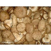 Quality Fresh Mushroom TC0101-01 for sale