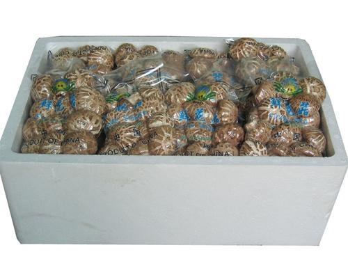 Buy Fresh Mushroom TC0101-04 at wholesale prices