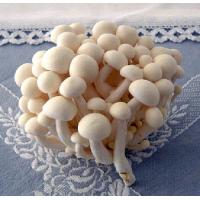 Quality Fresh Mushroom TC0105 for sale