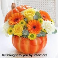 Buy cheap Trick or Treat Ceramic from wholesalers