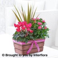 Buy cheap Happy Birthday Rosy Pink Autumn Planter from wholesalers