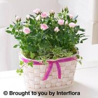 Buy cheap Happy Birthday Pink Rose Duo from wholesalers