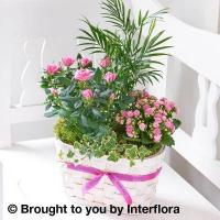 Buy cheap Happy Birthday Rose & Kalanchoe Basket from wholesalers