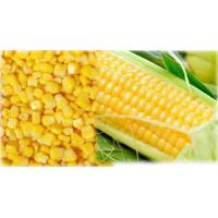 Quality Frozen Corn for sale