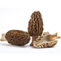 Quality Morel mushrooms grey morel mushrooms for sale