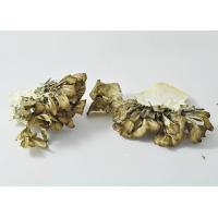 China Cultivated mushrooms Dried Maitake on sale