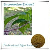 Quality Cortex Eucommiae extract 10:1 for sale