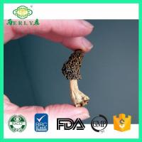 Quality dried morel mushrooms for sale from Yunan Morchella esculenta for sale