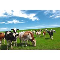 Quality Enzyme preparation Complex Enzyme for Ruminant for sale