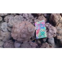 Quality wild edible fungus Truffle for sale