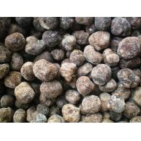 Quality wild edible fungus Frozen Truffle for sale
