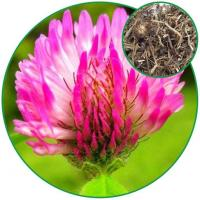 Quality Red Clover, Chinese Herbal Medicine Anti-cancer for sale
