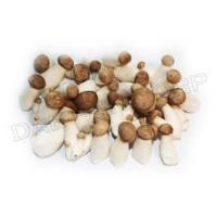 Quality MINI KING OYSTER MUSHROOM for sale