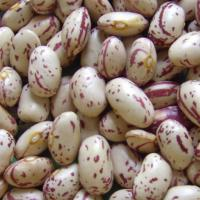 Buy cheap Beans Round Shape Light Speckled Kidney Bean from wholesalers