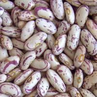 Buy cheap Beans Long Shape Light Speckled Kidney Bean from wholesalers