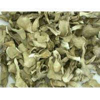 Buy cheap Grifola frondosa from wholesalers