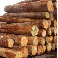 Quality RADIATA PINE LOG FROM NEW ZEALAND for sale
