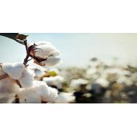 Quality Indian Raw Cotton for sale
