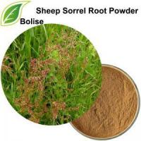 Quality Sheep Sorrel Root Powder for sale